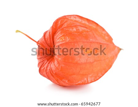 Red physalis isolated on a white background
