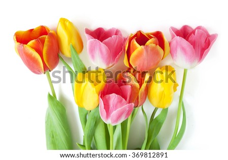 Red, pink and yellow tulips bunch isolated on white background