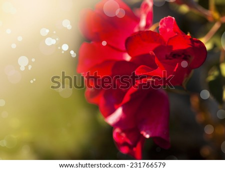 Red Pink flowers, Flower background in pink tones, Beautiful pink flowers made with color filters, spring bloom, retro background - stock photo