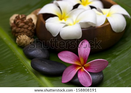 Red/pink frangipani with spa concept - stock photo