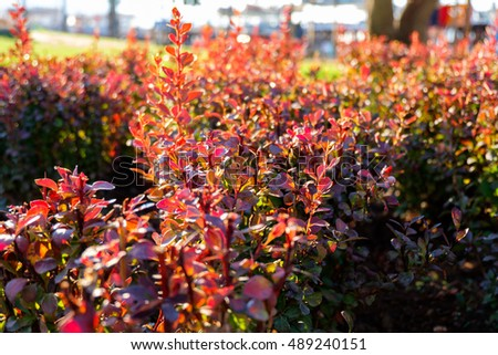 Red plant in a green park, selective focus