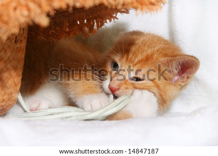 red playful kitten - stock photo