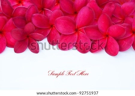 Red Plumeria Frangipani Flower for Spa and Wellness Concept with Space for Text - stock photo