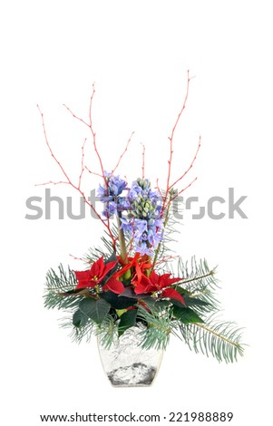 Red poinsettia and hyacinth in glass flowerpot,  christmas flower on white background.  - stock photo
