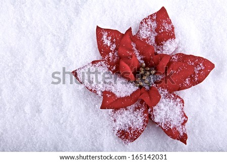 Red poinsettia ,artificial Christmas flower snowflakes on background - stock photo