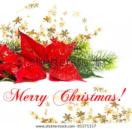 Red Poinsettia. Christmas Flower with golden decoration. Merry Christmas! card concept - stock photo