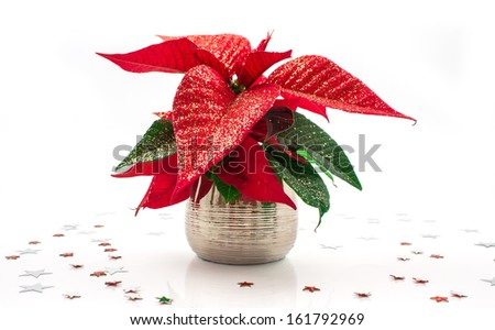 Red poinsettia isolated on white - stock photo