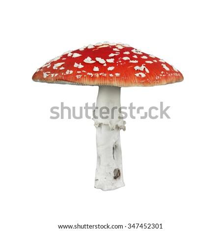 Red poison mushroom isolated on white - stock photo