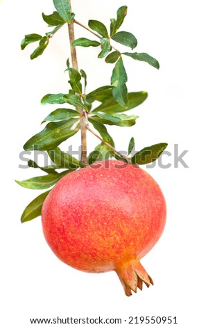 Red pomegranate fruit  - stock photo