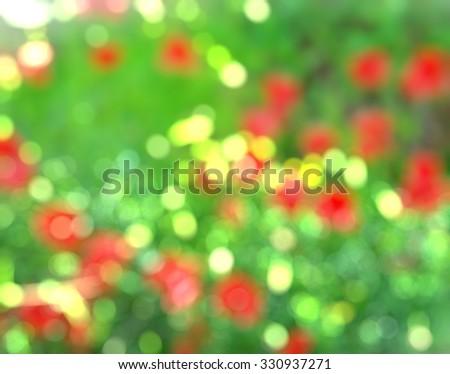 red poppies bokeh - stock photo