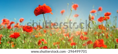 Red poppies field  in the sky - stock photo
