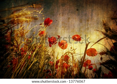 red poppies in grunge background - stock photo