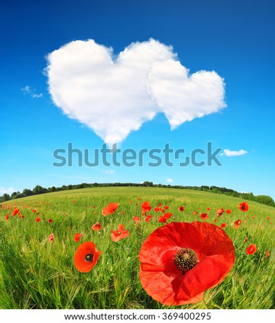 Red poppies in wheat field and blue sky with a white clouds in the form of heart. Valentines day. - stock photo