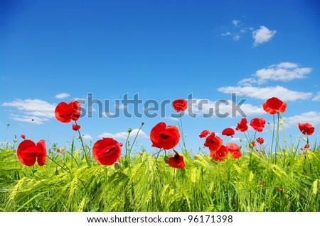 red poppies on green field on sky