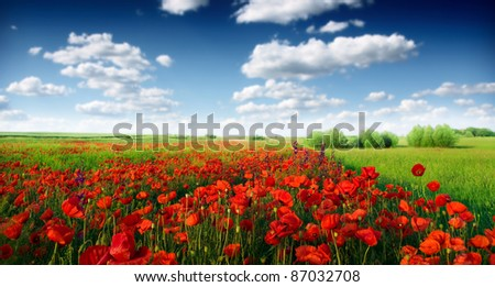 Red poppies on spring meadow - stock photo