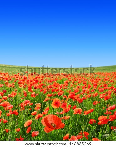 red poppies with blue sky