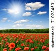 red poppy - stock photo