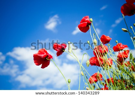 red poppy against blue cloudy sky