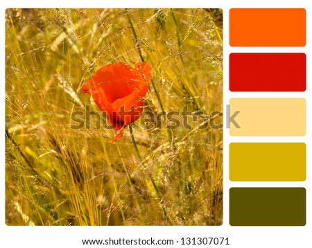 Red poppy color palette with complimentary swatches. - stock photo