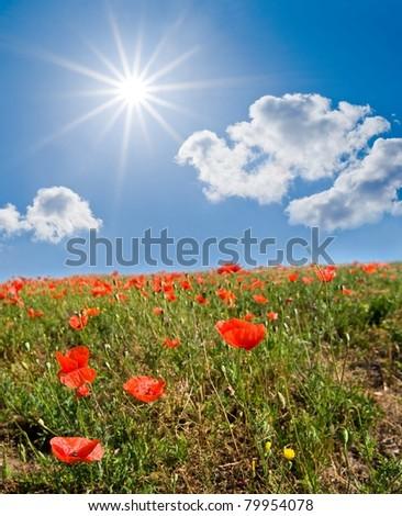 red poppy field under a sparkle sun - stock photo