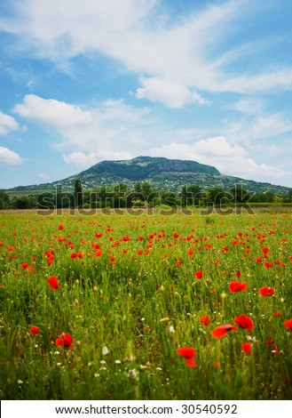 Red poppy field with hill - stock photo