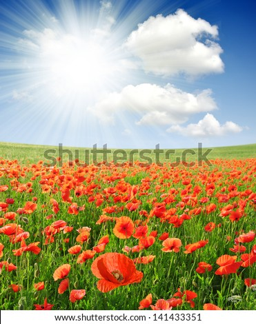 red poppy field with sunny sky - stock photo