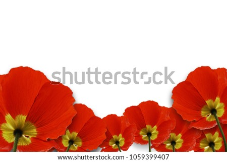 Red poppy flower remembrance anzac day stock photo royalty free red poppy flower remembrance anzac day isolated on white background with saved clipping path mightylinksfo