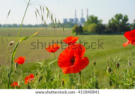 Red poppy flowers in front of a field - stock photo