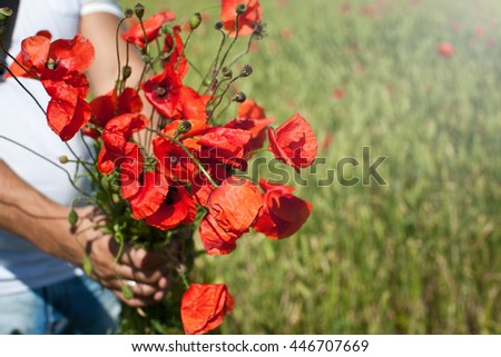 Red poppy flowers in men hands isolated on poppy field. Close up of young man giving bouquet of flowers.