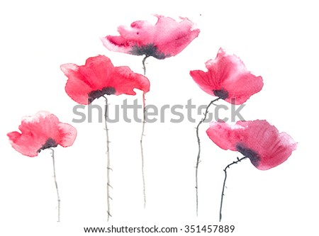 Red poppy flowers on white, watercolor painting