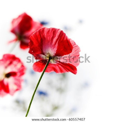 Red poppy in the middle of flower meadow - stock photo