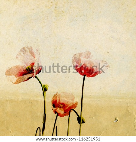 red poppy on grunge background - stock photo