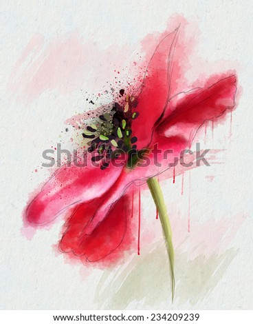 red poppy, watercolor illustration - stock photo