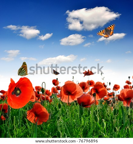 red poppy with butterfly - stock photo