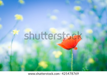 red poppy with starry sky background,  shallow dof, shot at f1.4
