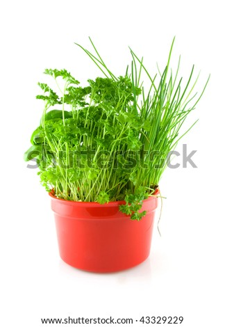Red pot with different herbs over white background