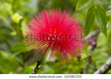 red powder puff - stock photo