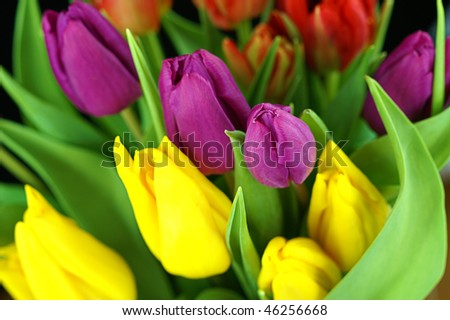 red, purple, yellow easter tulips arrangement - stock photo