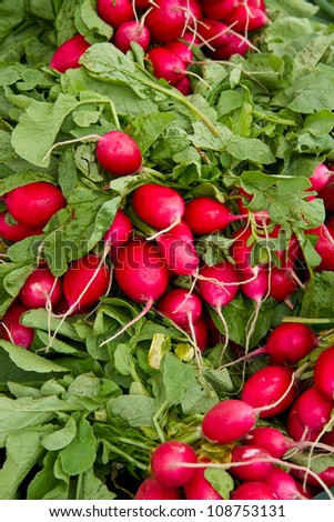 Red radishes found at a farmer's market - stock photo