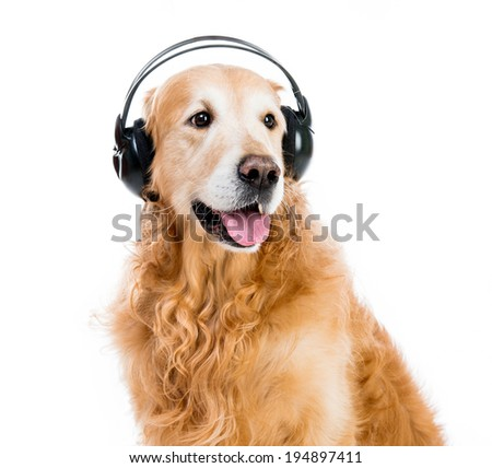 red retriever with headphones on a white background
