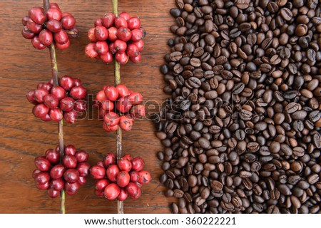 red ripe coffee and coffee beans on woodenbackgournd. - stock photo