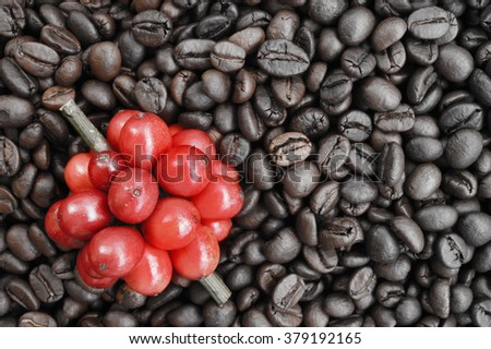 red ripe coffee on coffee beans backgournd take with selective color technique and art lighting - stock photo