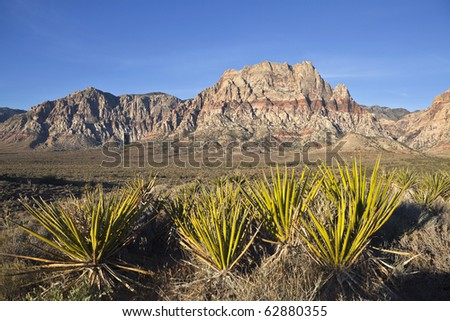 Red Rock Nevada sandstone and Yuccas in warm early morning light. - stock photo