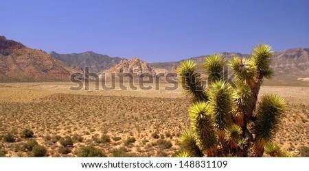 Red Rocks Canyon National Conservation Area- Near Las Vegas - Nevada - stock photo