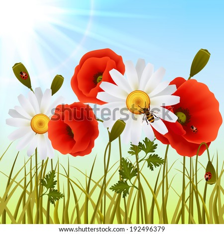 Red romantic poppy flowers white daisies and grass with ladybugs wallpaper  illustration - stock photo