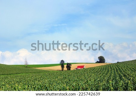 Red roof farm house in the middle of harvested corn field with sky and cloud. - stock photo
