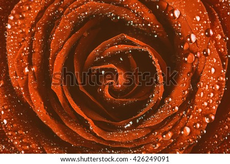Red Rose Abstract With Water Drops - stock photo