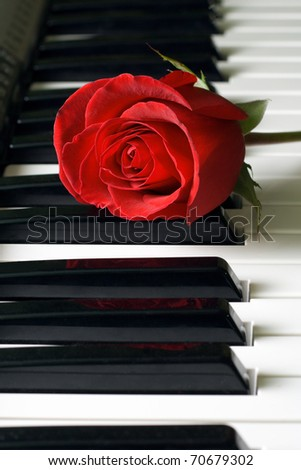 Red rose and black-and-white keys - stock photo