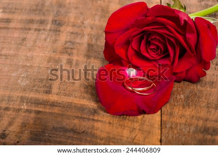 Red rose and petal with gold rings - stock photo