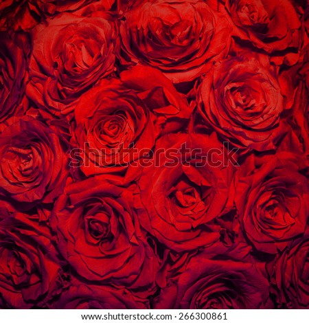 Red rose background  - stock photo
